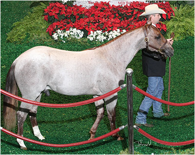 WOW! – 2012 NCHA Futurity Western Bloodstock Sales