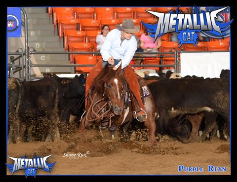 2015 NCHA Non Pro Horse of the Year – PURPLE REYN