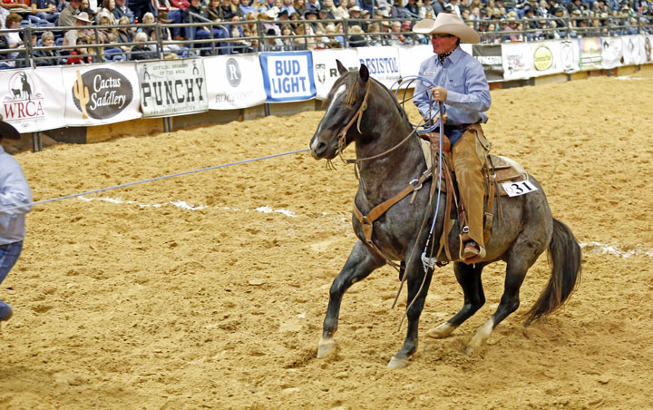 Champion Ranch Rodeo Horse
